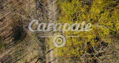 Bande annonce vidéo teaser Carapate